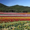 Photos: 彩りの畑