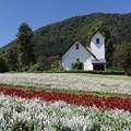Photos: 丘の白い教会
