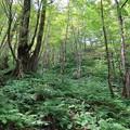 山深いブナ林