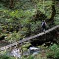 Photos: 渓谷の吊り橋