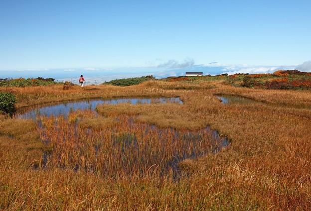 湿原を行く
