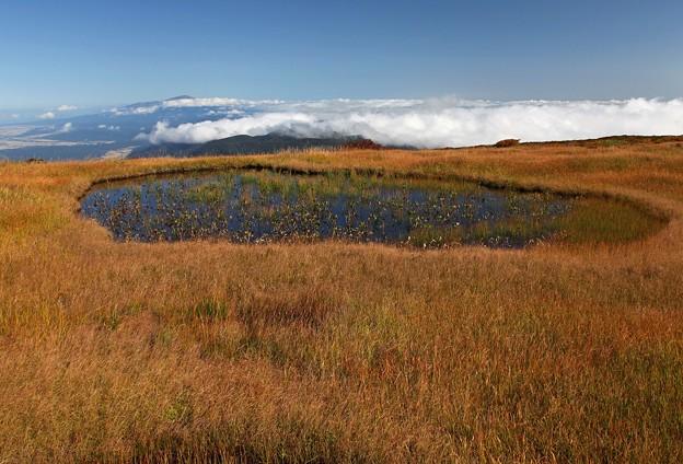 草紅葉と雲海と