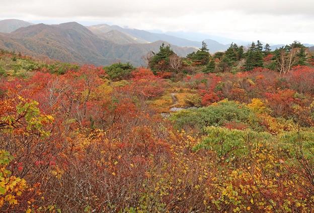 紅葉美の栗駒山