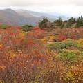 Photos: 紅葉美の栗駒山