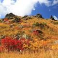 Photos: 紅葉の鮮麗さ