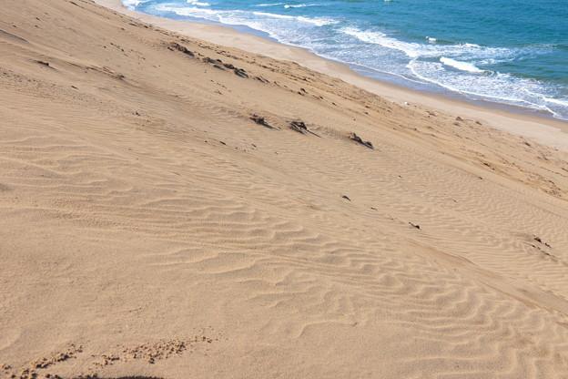 砂の波と水の波