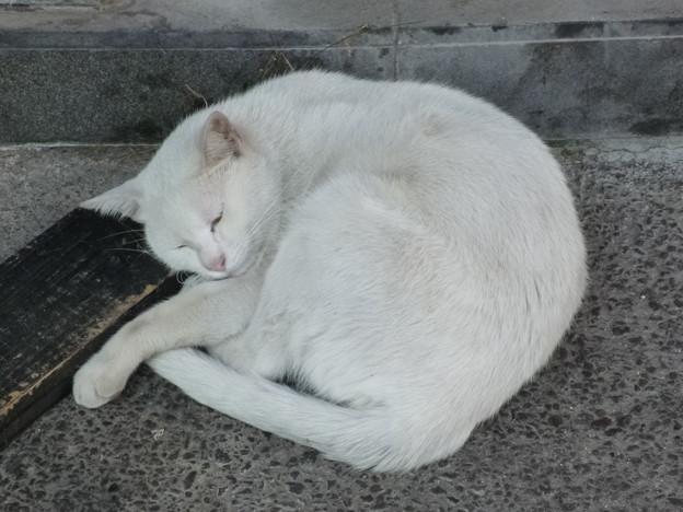 枕、硬くないですか?