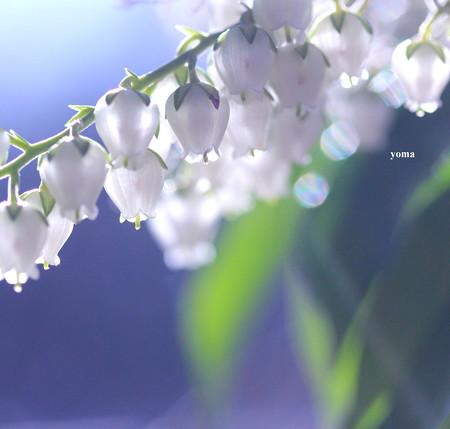 春の陽・・・
