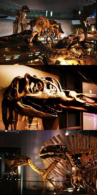 福井県立恐竜博物館-1