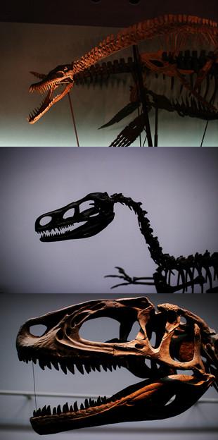 福井県立恐竜博物館-2