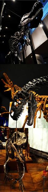 福井県立恐竜博物館-4