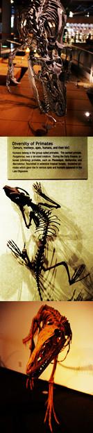 福井県立恐竜博物館-5