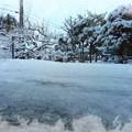 写真: 雪積もったー
