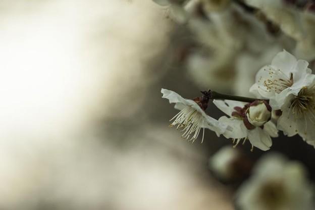 Photos: 春の訪れ 2