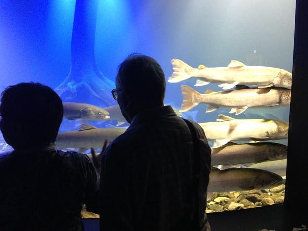 写真: 山の水族館