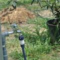 Photos: ハウスかん水用蛇口