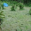 ハンマーナイフモアの草刈り後