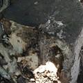 Photos: 謎の動物に破壊された原木