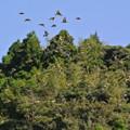 Photos: コスモスから飛び立った鳥の群れ