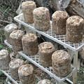 Photos: 菌床しいたけの菌床