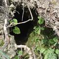 Photos: 謎の巣穴