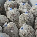 Photos: びわの種の冷凍