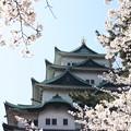 写真: 20110406名古屋城(桜) (3)