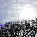 写真: 首里城 ・でいごの森