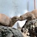 Photos: Give us kiss?