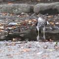 Photos: 水たまり…という名の?