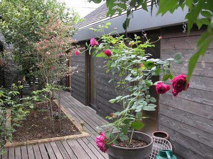 rose071019[1].jpg