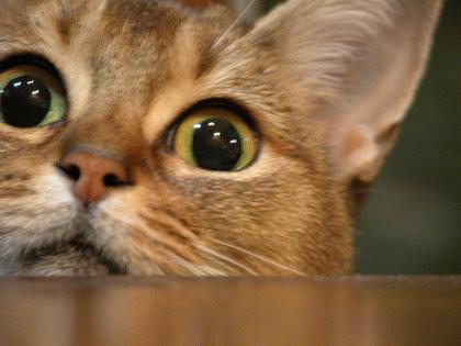 kn-cat.jpg