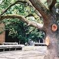 上野界隈シリーズ3 東京大学