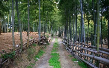 竹の径05