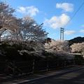 Photos: 4月4日 夕方の桜