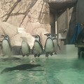 Photos: ペンギン休憩ちう…(*´∀`)♪
