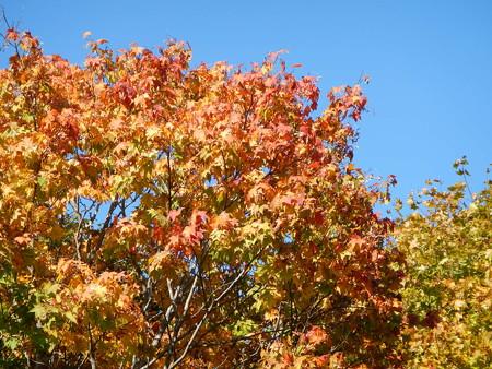 手稲前田森林公園の紅葉