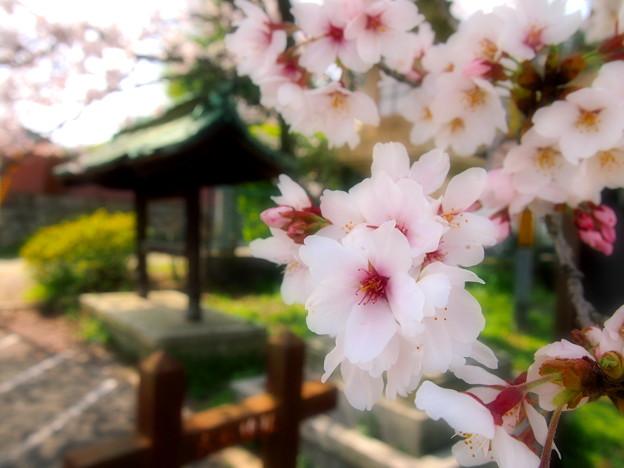大石神社2
