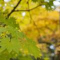 Photos: 箱根湿生花園04