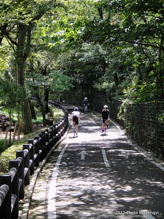 木陰のサイクリングロード