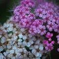 Walking in the Flowers 7-10-12
