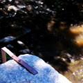 On the Dam 6-24-12