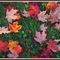 Bright Colors 10-6-12