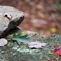 Fallen Leaves 10-9-12