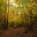 Golden Woods 10-9-12