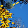 Photos: The Beech in the Light 10-21-12