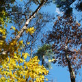 Photos: The Beech, the Oak and the Blue Sky