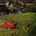 A Red Leaf 10-27-12
