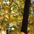 Photos: Green in Yellow 10-27-12