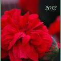 写真: Christmas 12-9-12